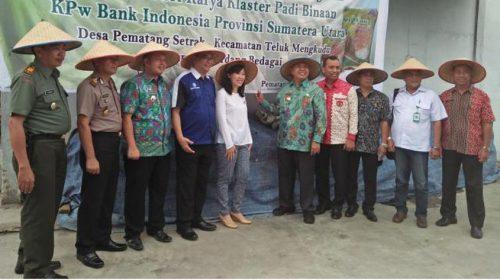 Beras Organik Sri Karya Binaan BI Wilayah Sumut Sukses Tembus Pasar Modern