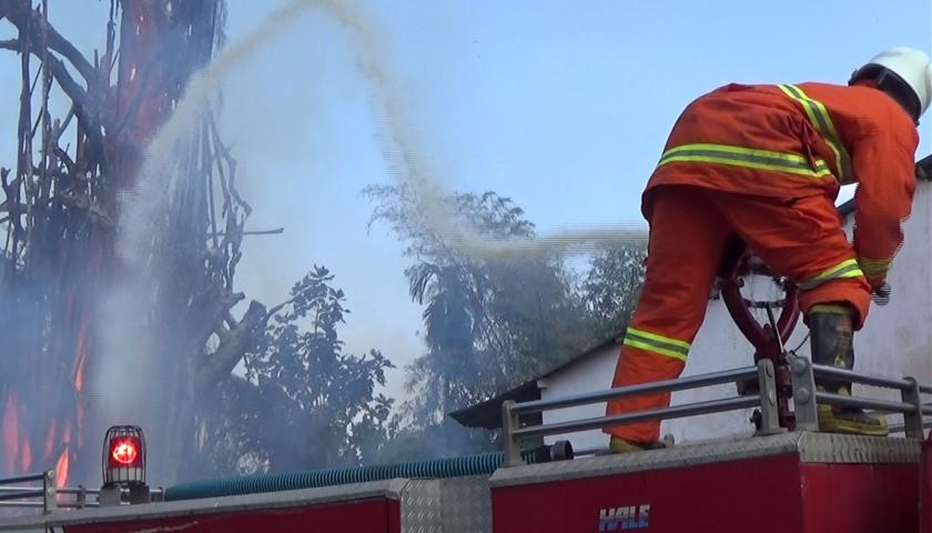 Pohon Beringin Usia Ratusan Tahun Terbakar di Tebing Tinggi