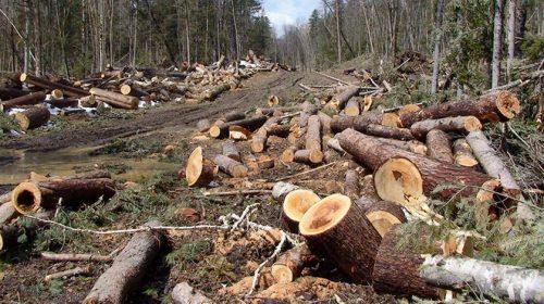 15 Miliar Pohon Hilang Setiap Tahun