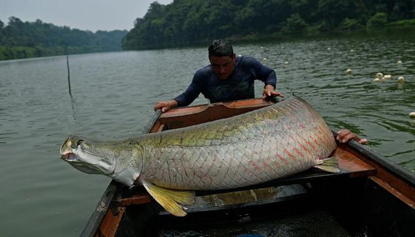 Inilah 6 Ikan Paling Berbahaya di Dunia