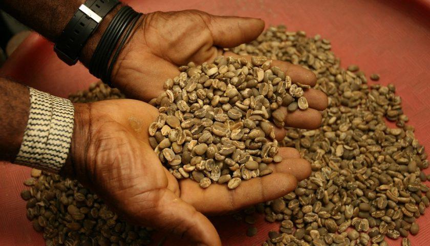 Pemerintah Dukung Peningkatan Kesejahteraan Petani Kopi