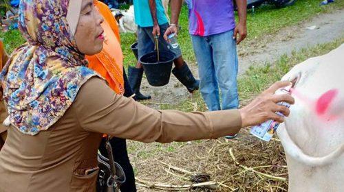 Hewan Kurban Medan Layak Konsumsi, Kata Walikota