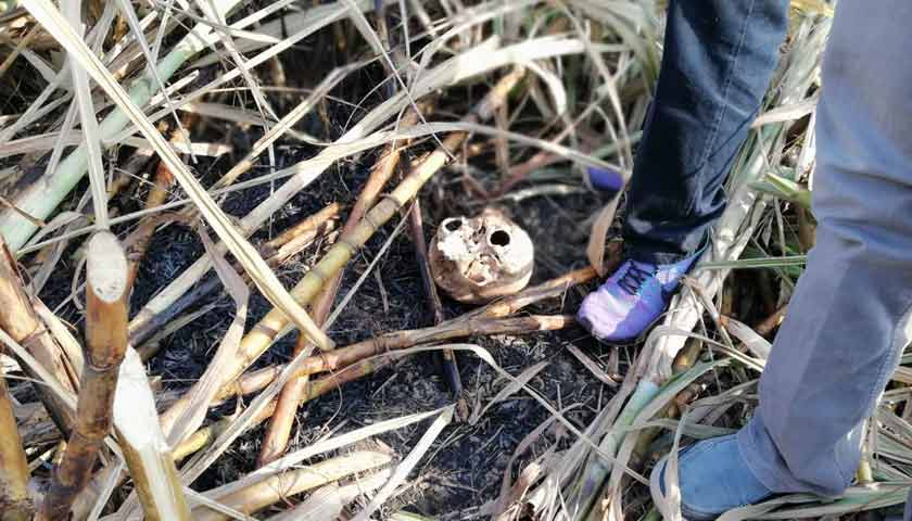 Klumpang Geger, Warga Temukan Tengkorak Kepala Manusia di Kebun Tebu