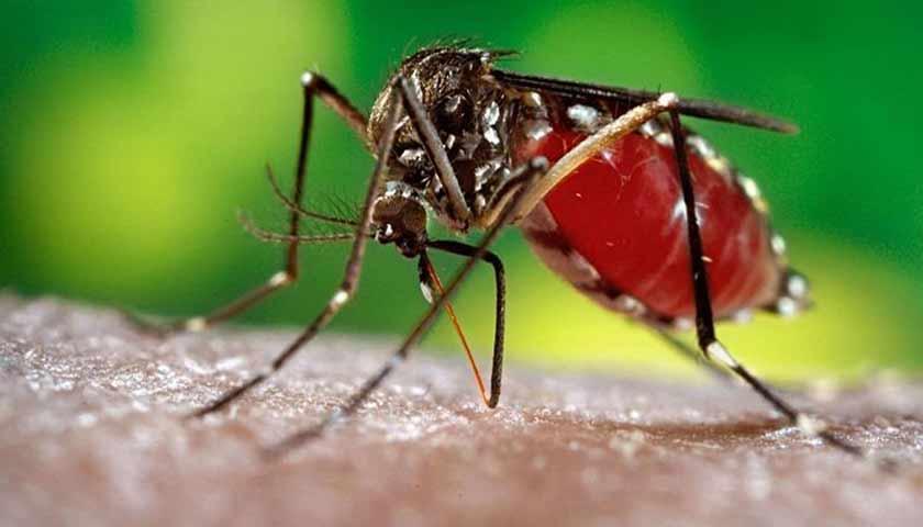 Cegah Demam Berdarah Dengue, Jangan Salah Berantas Sarang Nyamuk