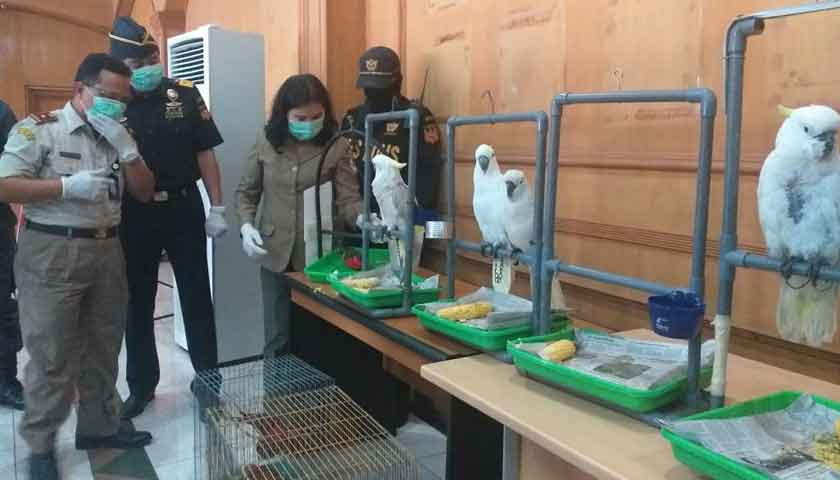 Bea Cukai Belawan Amankan 28 Burung Dilindungi