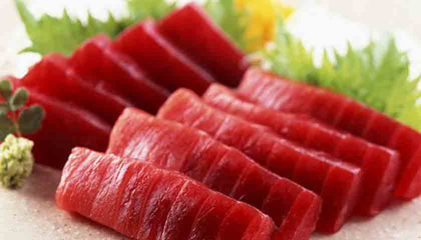 harga ikan tuna4