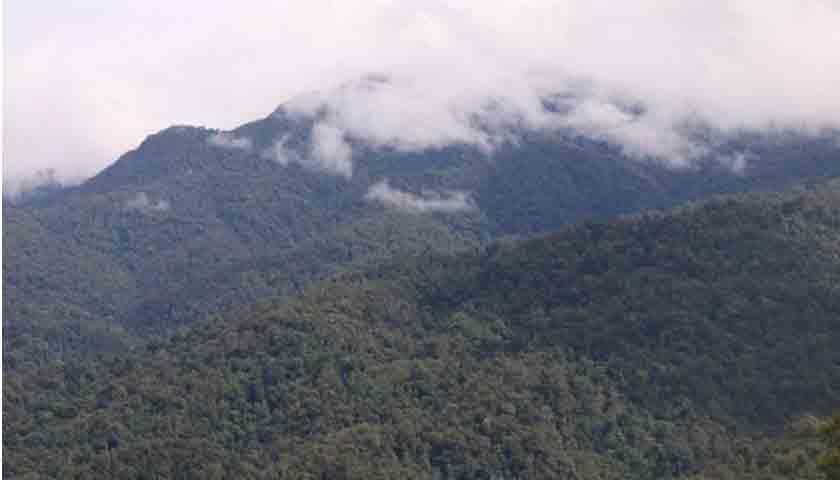 12 Pelajar di Riau Tersesat di Hutan TNBT, Hingga Kini Belum Ditemukan