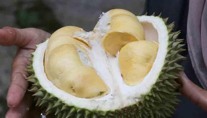 Durian Termahal di Dunia Terjual Rp 700 Juta