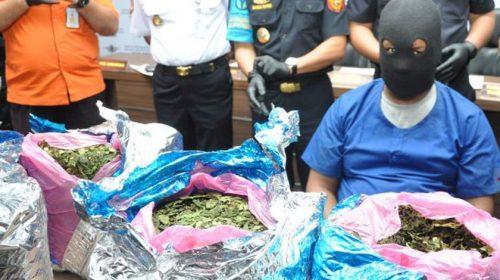 Bea Cukai Kualanamu Gagalkan Penyelundupan 10, 6 Kg Daun Khat