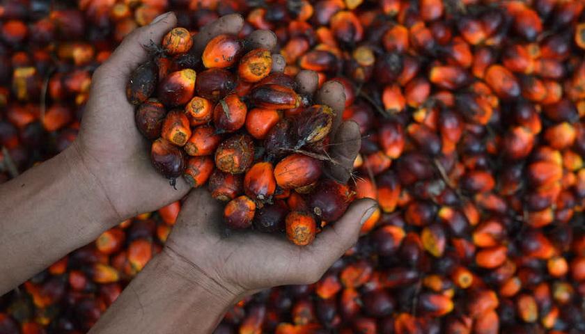Minyak Sawit Mulai Dilirik Sebagai Energi Bersih Terbarukan