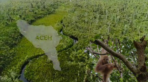 Top…! Hutan Rawa Singkil Surga Bagi Ratusan Spesies Hewan Endemik