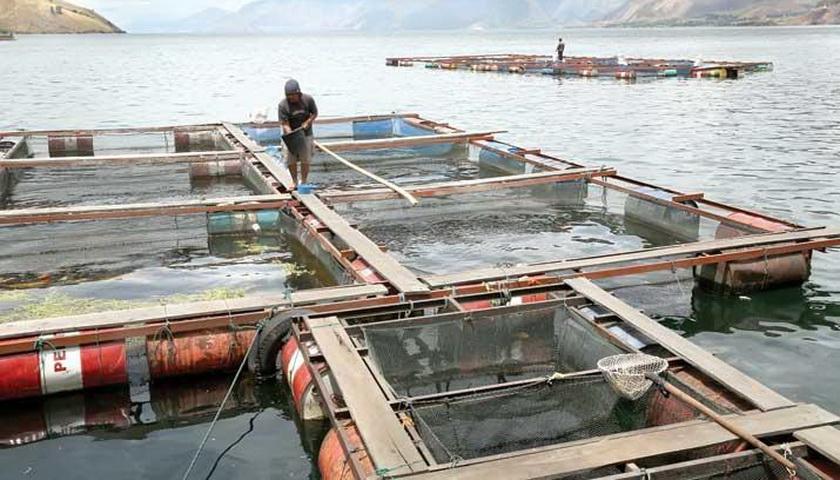 Sedikitnya 11.662 KJA  Beroperasi di Danau Toba