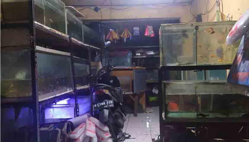 Kisah Gondrong, Penjual Ikan Hias, Ternyata Teroris Perakit Bom