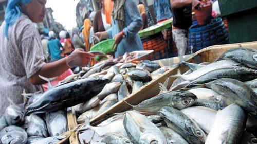 Ketua Fraksi Gerindra DPRD Medan Ajak Warga tak Takut Makan Ikan