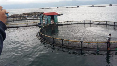 April 2020, Aquafarm Uji Coba Teknologi Sensor Audio untuk Otomatisasi Pakan Ikan