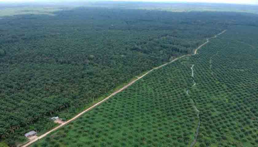 Jadi Orang Kaya, Tapi 1 Juta Hektar Sawit di Riau Menunggak Pajak
