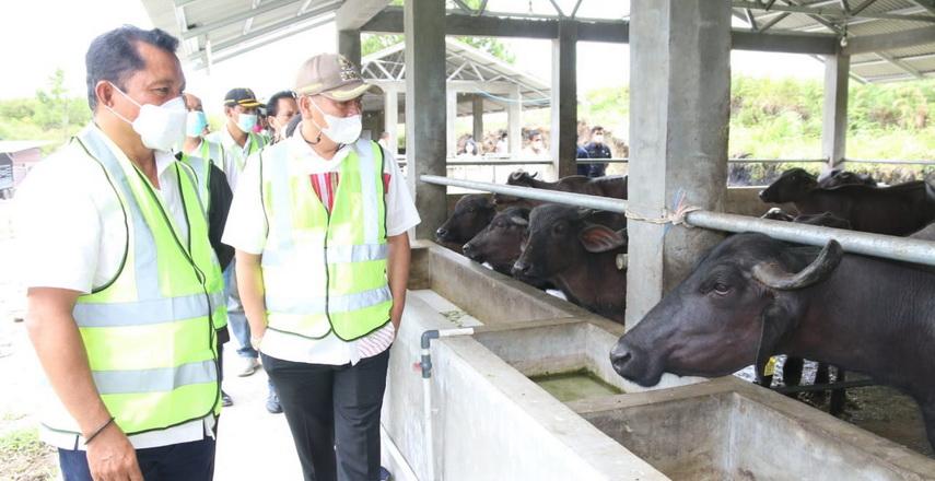 Bupati Taput Drs Nikson Nababan MSi Hadiri Peresmian Morrah Farm Koperasi Guna Satwa Mandiri