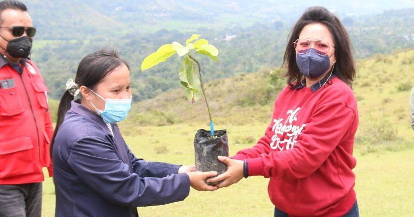 penanaman pohon berbuah